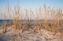 Zielony rzep z suchą trawą przy pustą lato plażą w ranku Morza i oceanu krajobraz zdjęcie stock