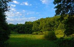 Zielony słoneczny dzień w Kokorin terenie obrazy stock