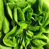 Zielony sałaty serca zakończenie up Zdjęcia Stock