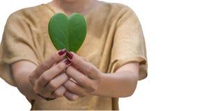 Zielony serce na ręce Obraz Royalty Free