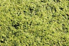 zielony slime zdjęcia royalty free