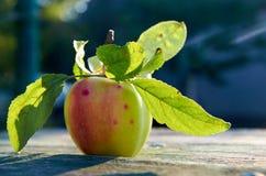 Zielony soczysty jabłko z liśćmi na z drewnianym starzejącym się tekstury tła zakończeniem up Apple w świetle słonecznym na zamaz Obrazy Royalty Free