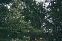 Zielony sosnowy las filtrujący Zdjęcia Stock