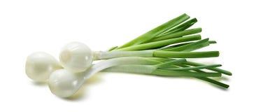 Zielony sping cebulkowy scallion na białym tle zdjęcia stock