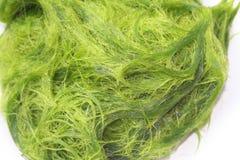 Zielony spirogyra jest świeżych wod algami bardzo wysokich wapnie i karoten, używać dla gotować, ono jest popularny w północy i N obraz royalty free