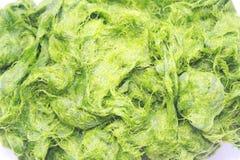Zielony spirogyra jest świeżych wod algami bardzo wysokich wapnie i karoten, używać dla gotować, ono jest popularny w północy i N obraz stock
