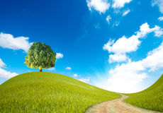 zielony sposób obraz royalty free