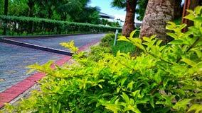 zielony sposób Zdjęcie Royalty Free