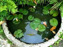 zielony staw przerastać stawowe małe stawowe wodne leluje Obraz Stock