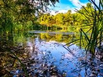 Zielony staw w brzeg rzeki parku Zdjęcie Royalty Free