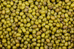 Zielony suchych fasoli makro- tło Obraz Royalty Free