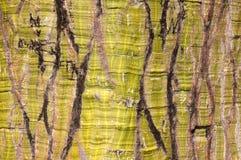 zielony szczekać drzewo. Obrazy Royalty Free