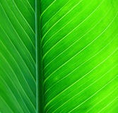 zielony tło liść Zdjęcia Stock