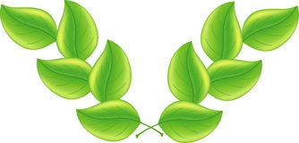 zielony tło liść Obrazy Stock