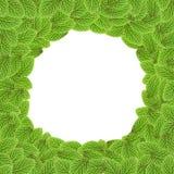 zielony tło liść Fotografia Royalty Free