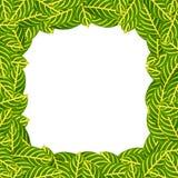 zielony tło liść Obraz Stock