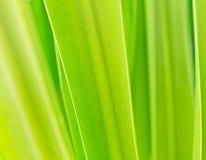 zielony tło liść Obrazy Royalty Free