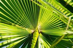 Zielony tło liście fotografia stock