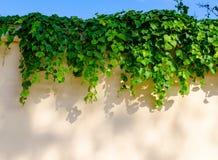 Zielony tło liście obraz stock