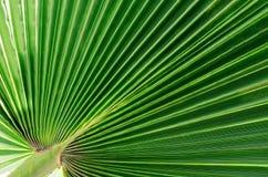 Zielony tło liście obraz royalty free