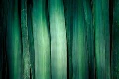 Zielony tło robić zielony liść Fotografia Royalty Free