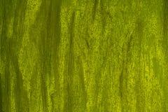 Zielony tło smarujący z muśnięciami, ścienna tekstura obrazy stock