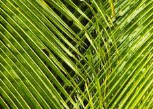 Zielony tło z drzewko palmowe liśćmi Obrazy Stock