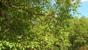 Zielony tło z drzewnymi liśćmi, Fotografia Royalty Free