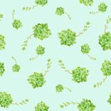 Zielony Tłustoszowaty roślina wzoru błękita tło obraz royalty free
