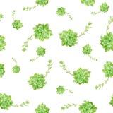 Zielony Tłustoszowaty roślina wzoru bielu tło zdjęcie stock