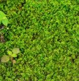 zielony tła moss Fotografia Stock
