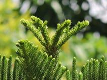 Zielony tło Fotografia Royalty Free