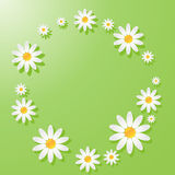 Zielony tło z chamomiles zdjęcia royalty free