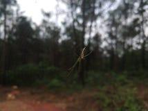 Zielony tekstura pająk obrazy stock