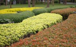 Zielony tradycyjny labirynt z budą Zdjęcia Royalty Free