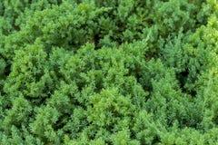 Zielony trawiasty gazon zdjęcie stock
