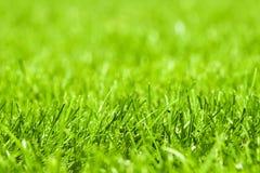 Zielony trawiasty gazon obraz royalty free