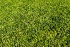 zielony trawnik Zdjęcie Royalty Free