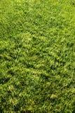 zielony trawnik Fotografia Stock