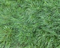 zielony trawnik Obrazy Royalty Free