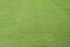 zielony trawnik Obraz Royalty Free