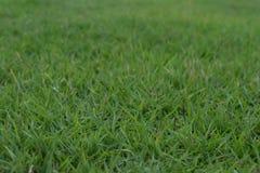 zielony trawnik Zdjęcia Royalty Free
