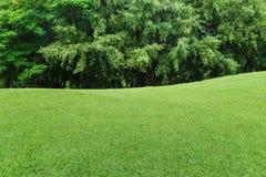 zielony trawnika drzewo Obrazy Stock