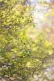 Zielony trawy plamy tło Zdjęcie Stock