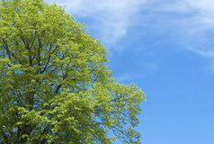zielony treetop obraz stock