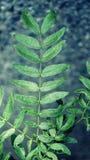 zielony trzon Zdjęcia Royalty Free