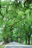 zielony tunel Obrazy Stock