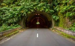 Zielony tunel w Sao Miguel Zdjęcie Stock