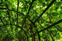 zielony tunelu Zdjęcie Stock