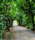 zielony tunelu Zdjęcie Royalty Free